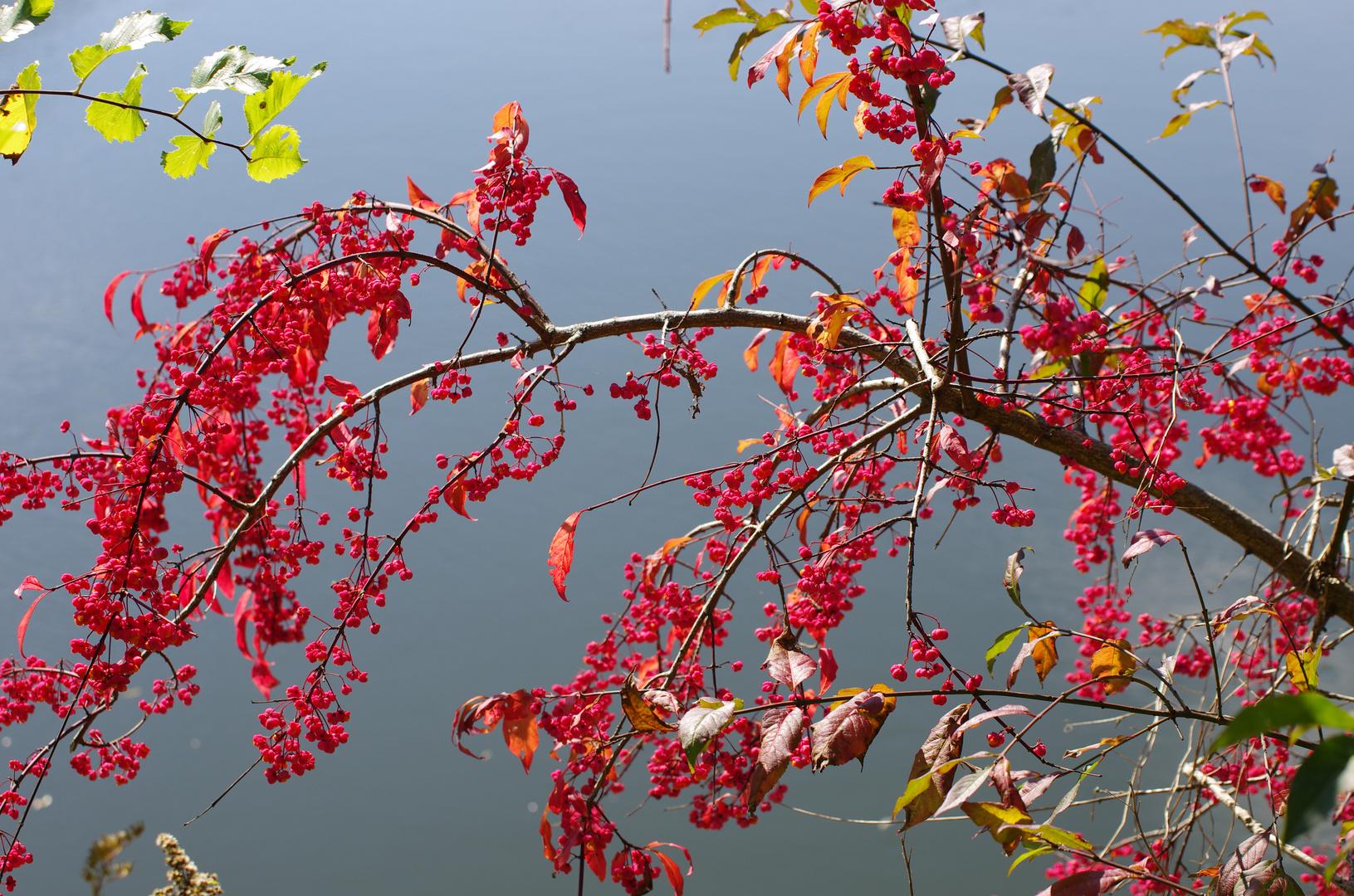 Die tollen Farben des Herbstes