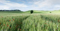 Die Toskana im Mai**
