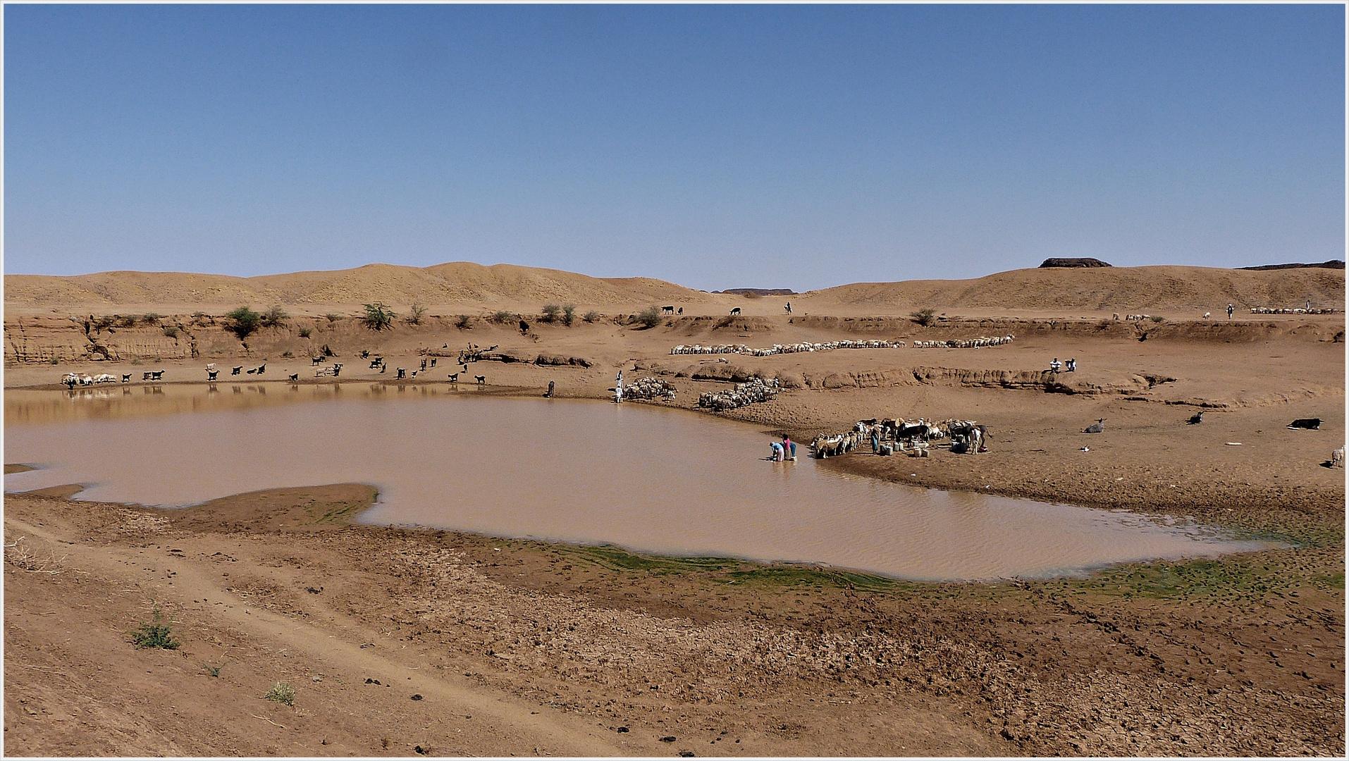 die Tränke in der Wüste.............. Foto & Bild   africa, eastern ...