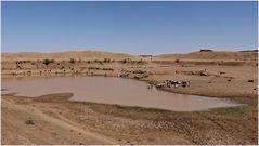 die Tränke in der Wüste..............