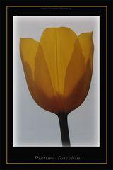 """""""Die Tulpe"""""""