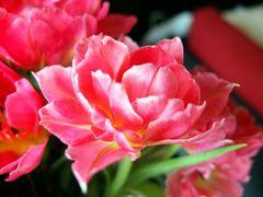 die Tulpen in meiner Vase