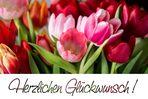 Die Tulpen sind dies Jahr spät dran ...