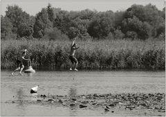 Die Über-das-Wasser-Läufer
