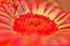 Die ultimative Blumenwelt