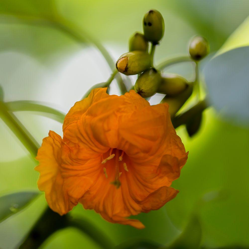 die unbekannte mittwochsblüte