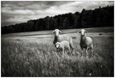 """""""Die Unschuld des Lammes"""""""