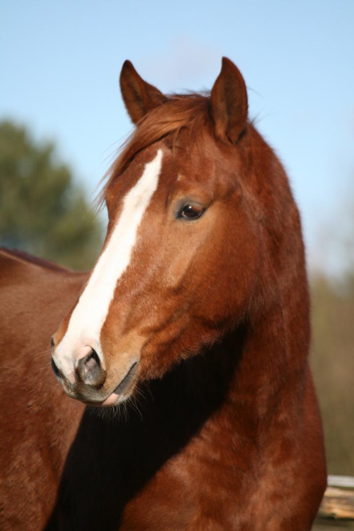 Die Unschuldigkeit im Pferd