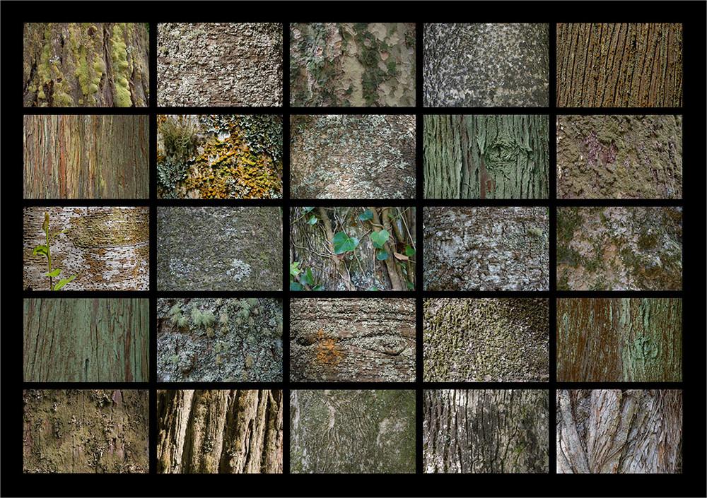 Die uralten Bäume im Park Terra Nostra.
