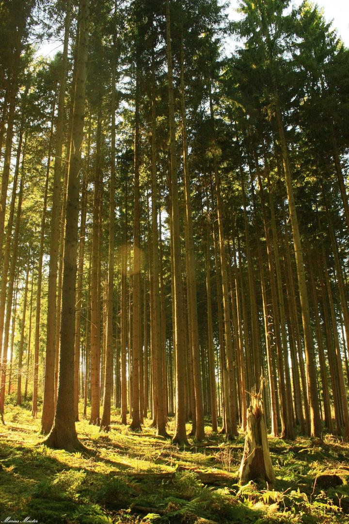 """Die """"Urwälder"""" von heute... (2)"""