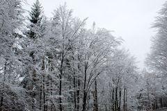 die vereisten Schneebrocken prasseln hernieder