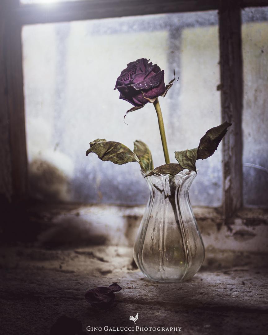 Die vergessene Rose