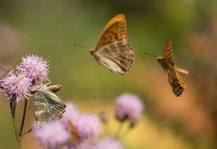 die verlockende Natur... gewinnt :-)