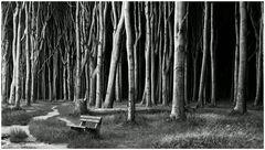 Die vielen Bäume und die ...