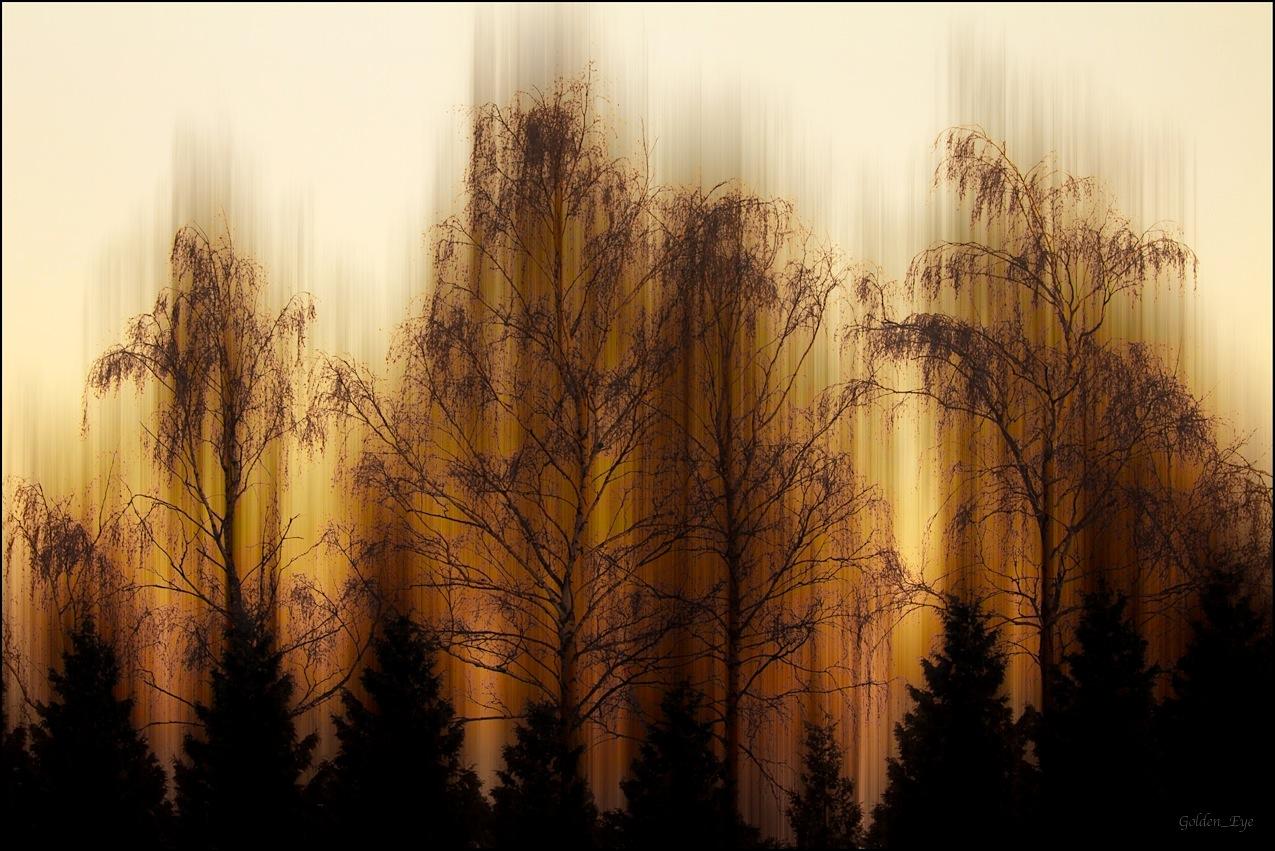 Die vier Birken