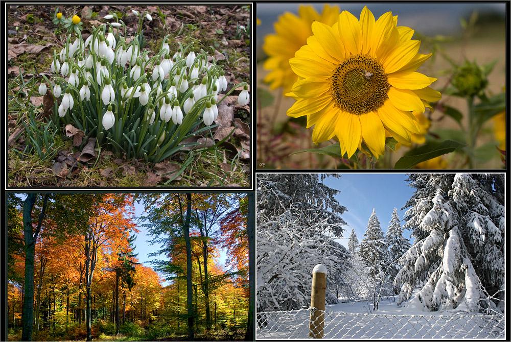 Die vier Jahreszeiten