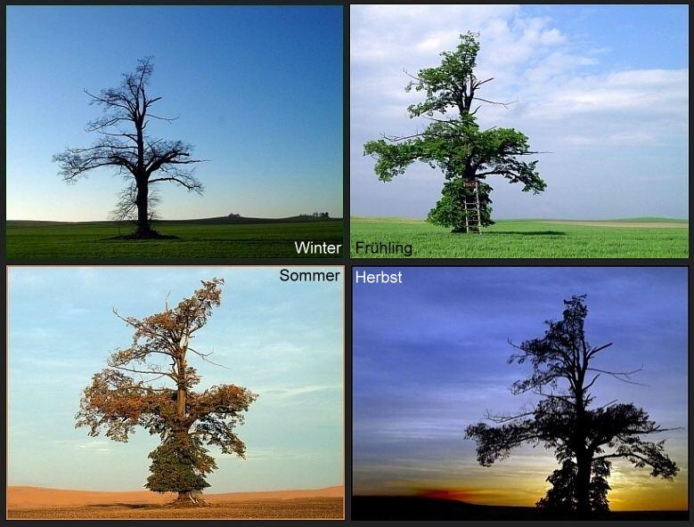 Die vier Jahreszeiten einer Linde