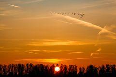 Die Vögel des Glücks
