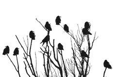 die Vögel.......