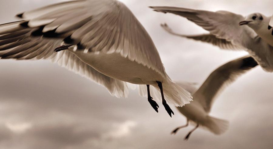 'die Vögel' II von A.H.