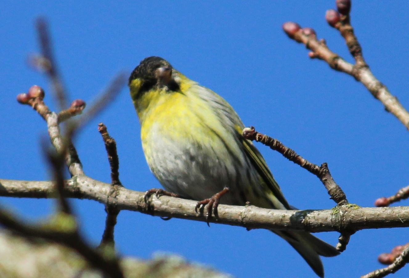 Die Vögel singen wieder