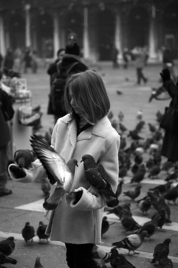 Die Vögel von Sankt Marco