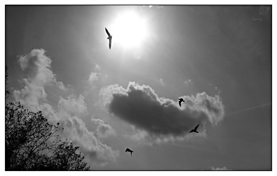 Die Vögel ziehen schwirren Flugs...