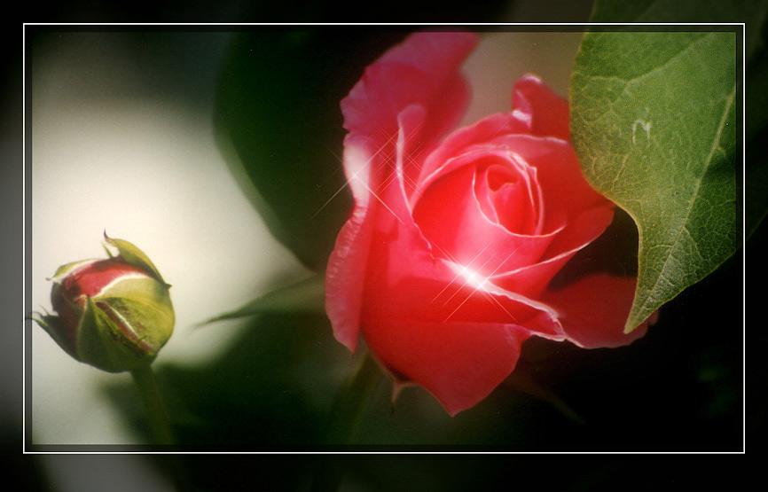 Die Vollkommene Blüte