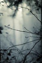 die Wälder #142