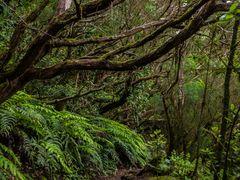 Die Wälder im Anaga