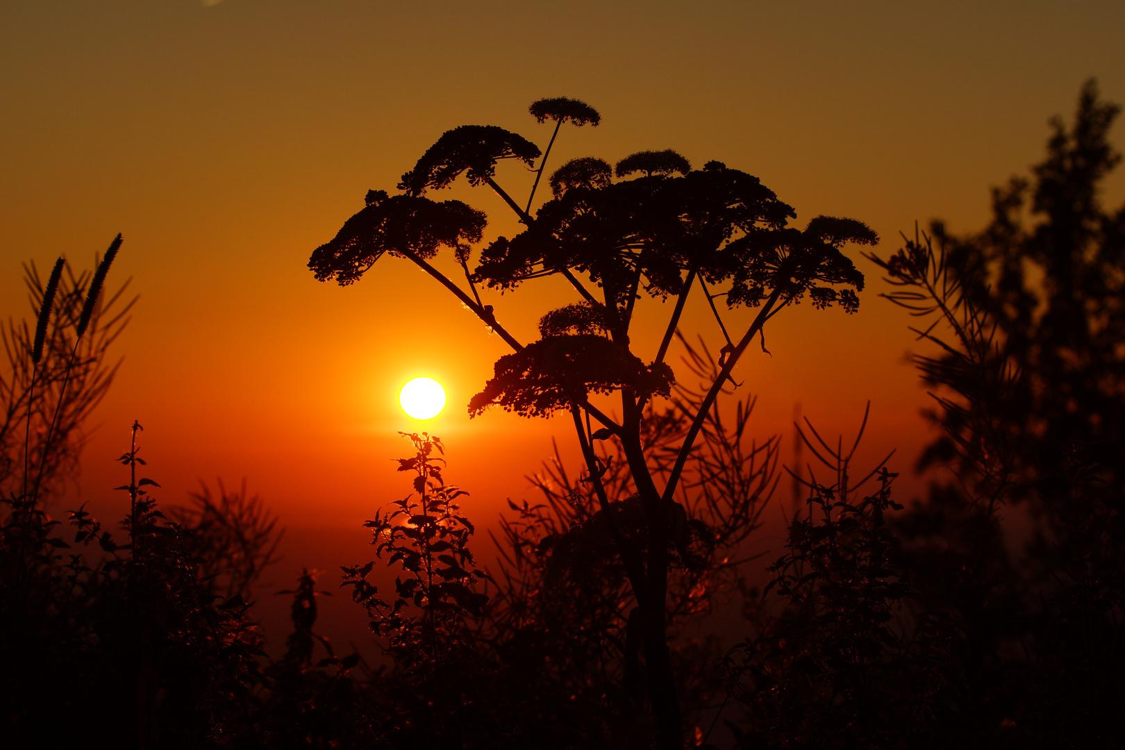 Die wärmende Sonne am Berg (Archivebild)