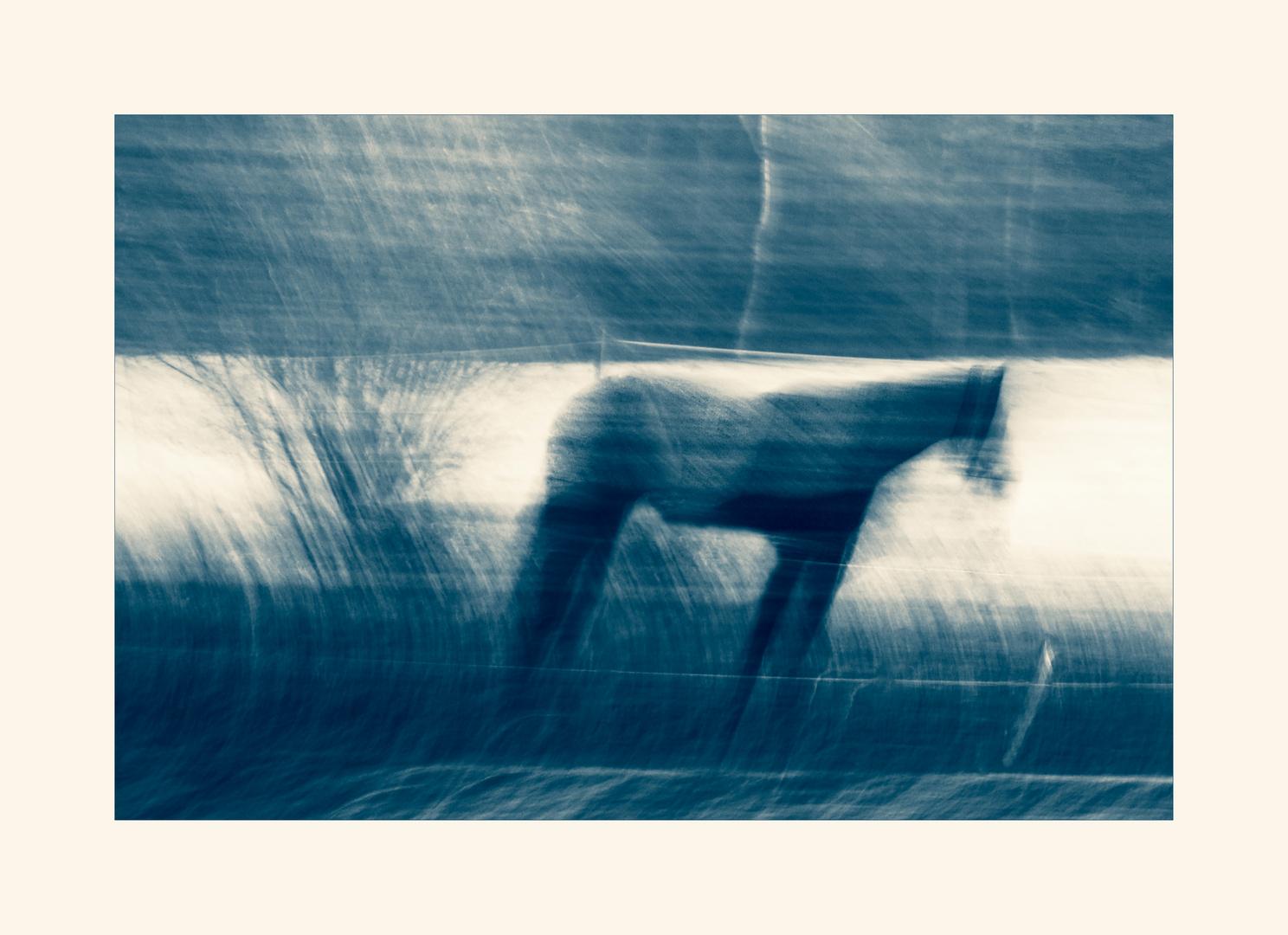 Die Wahrheit ist: kein Pferd und auch kein Schnee!