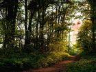 ---Die Waldfee---