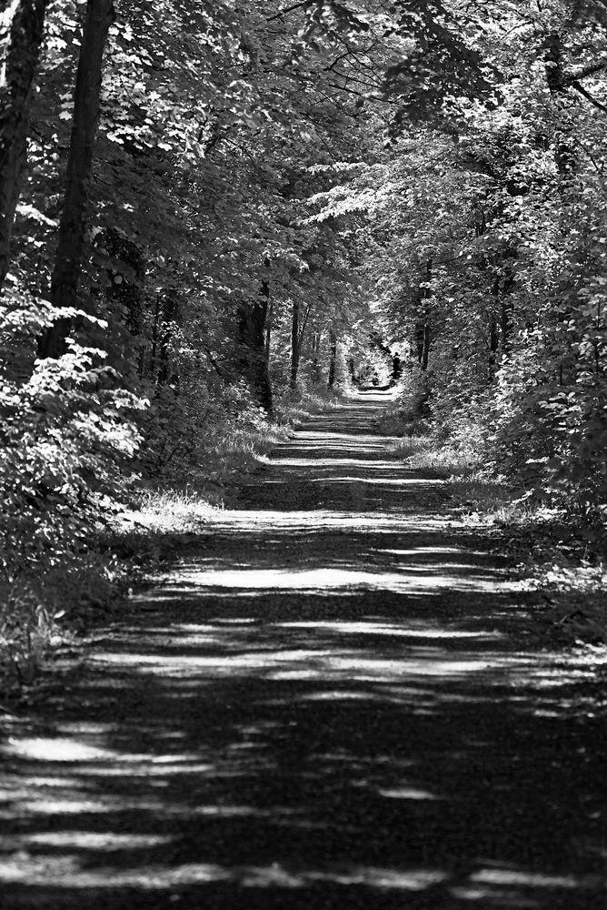 die Waldtastatur