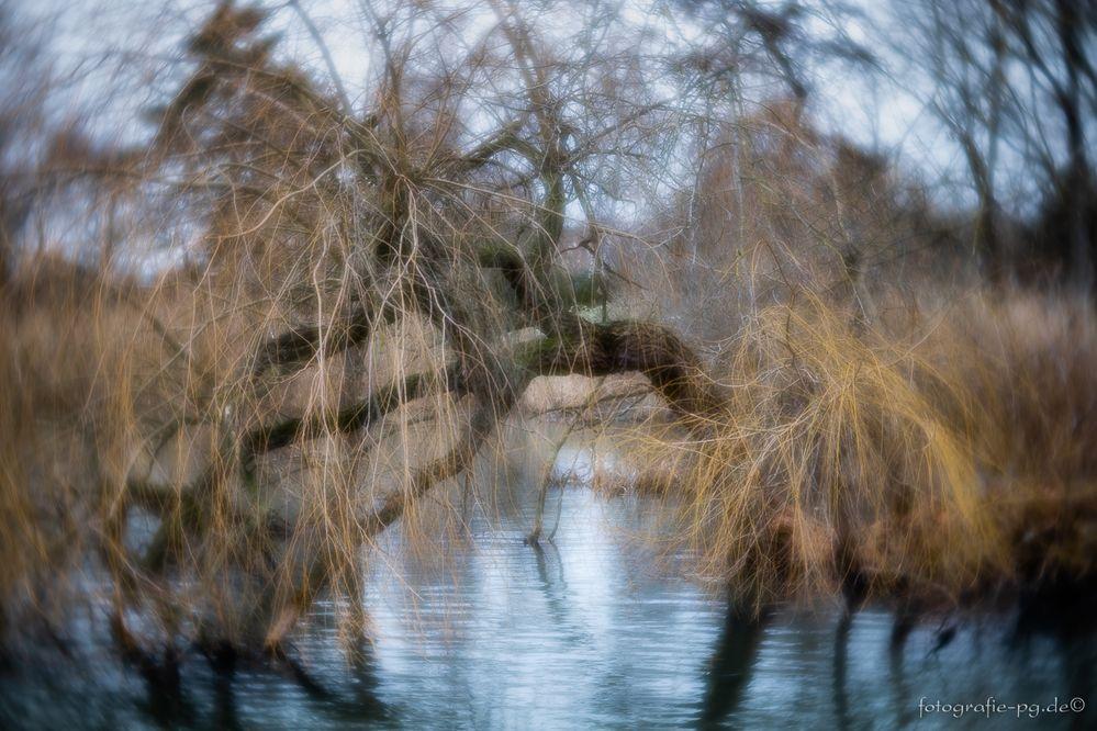 ... die Weide am Ufer ...
