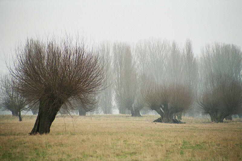 Die Weiden warten auf den Frühling
