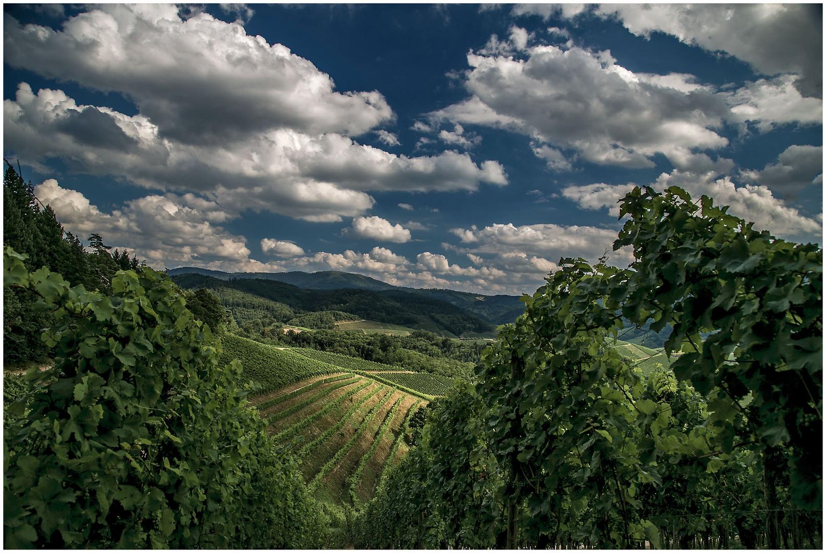Die Weinberge im Schwarzwald.....