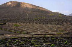 Die Weinberge Lanzarotes