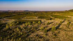 die Weinfelder des Audetals