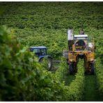 Die Weinlesemonster rollen wieder...