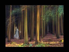 Die weisse Frau im Zauberwald