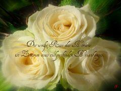 Die weiße Rose ...