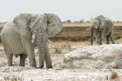 Die weißen Elefanten