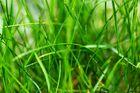 Die Weiten der Gräser