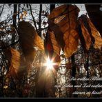 Die welken Blätter