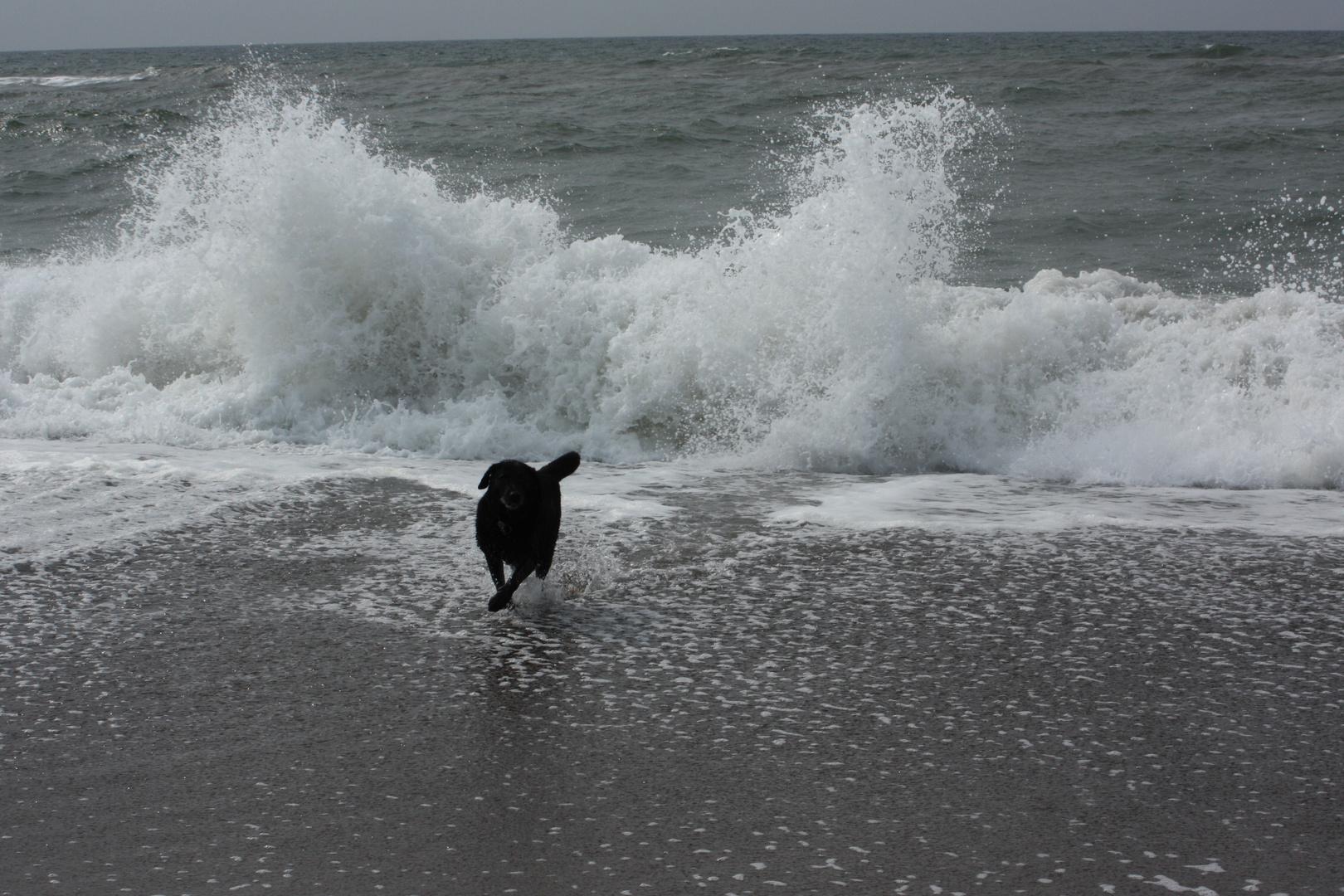 Die Welle kommt