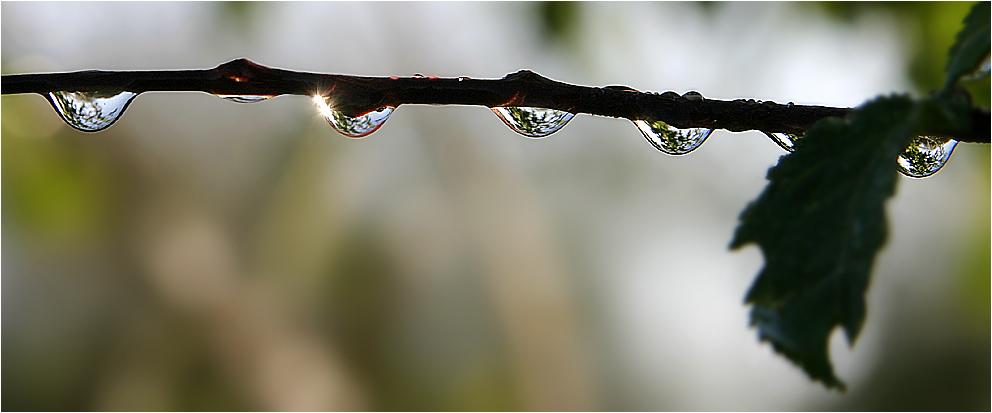 Die Welt durch Wasser betrachten