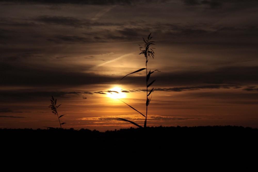 Die Wesermarsch im Sonnenuntergang
