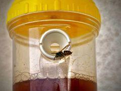 die Wespenfalle