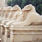 die Widdersphynxallee von Karnak